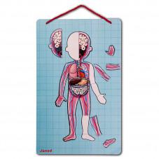 jeu magnétique éducatif body magnet